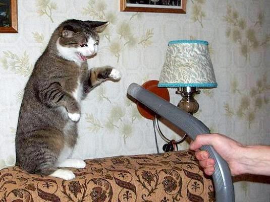 Фото - Чого бояться кішки?