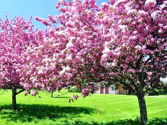 Фото - Чим хороша весна?