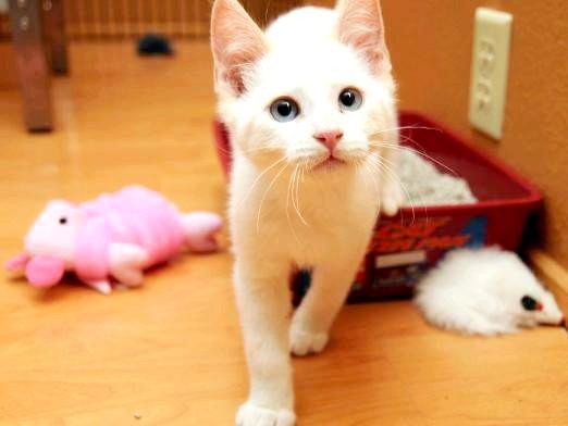 Фото - Чим вивести запах котячої сечі?