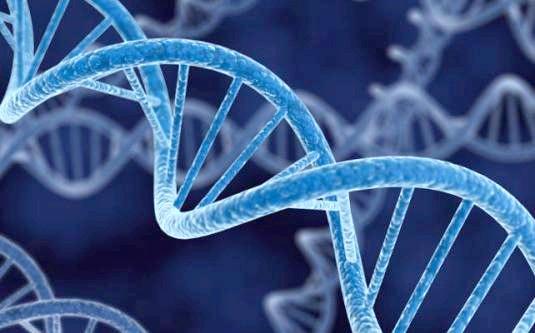 Фото - Що таке ген?