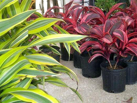 Фото - Для чого потрібні рослини?