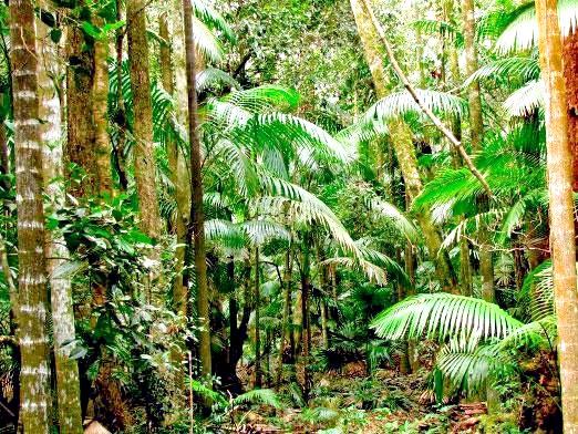 Фото - Де ростуть тропічні ліси?