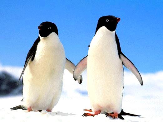 Фото - Де живуть пінгвіни?