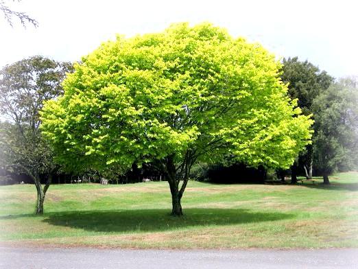 Фото - До чого сниться дерево?