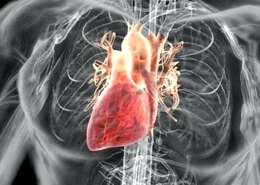 Фото - До чого сниться серце?