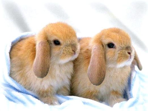 Фото - До чого сняться кролики?