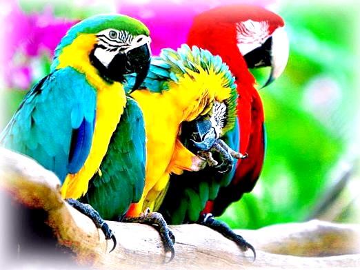 Фото - До чого сняться папуги?