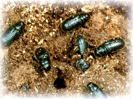Фото - До чого сняться жуки?