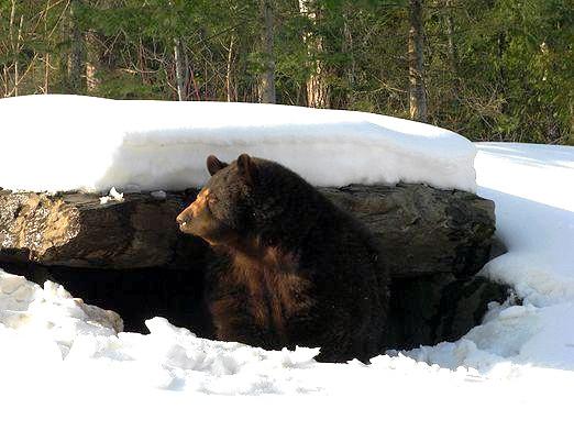 Фото - Як готуються звірі до зими?