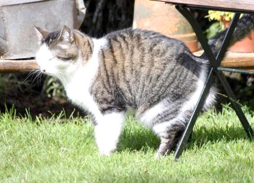 Фото - Як мітять коти