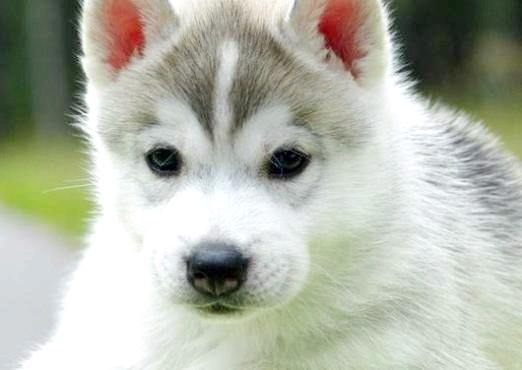 Фото - Як можна назвати собаку-дівчинку?
