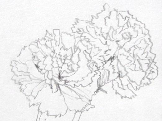Фото - Як намалювати гвоздику?
