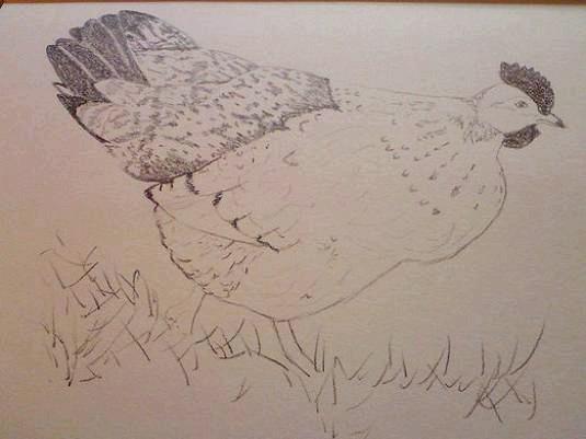 Фото - Як намалювати курку?