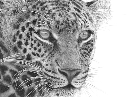 Фото - Як намалювати леопарда?