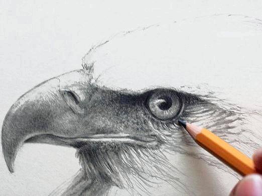 Фото - Як намалювати орла?