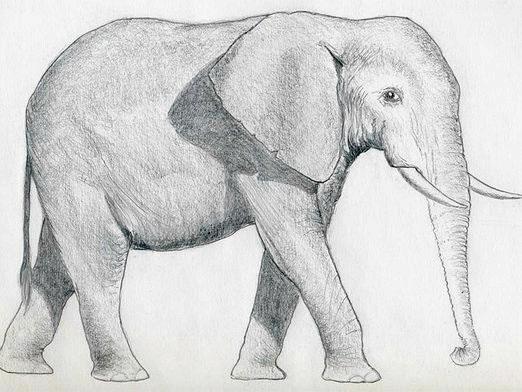 Фото - Як намалювати слона?