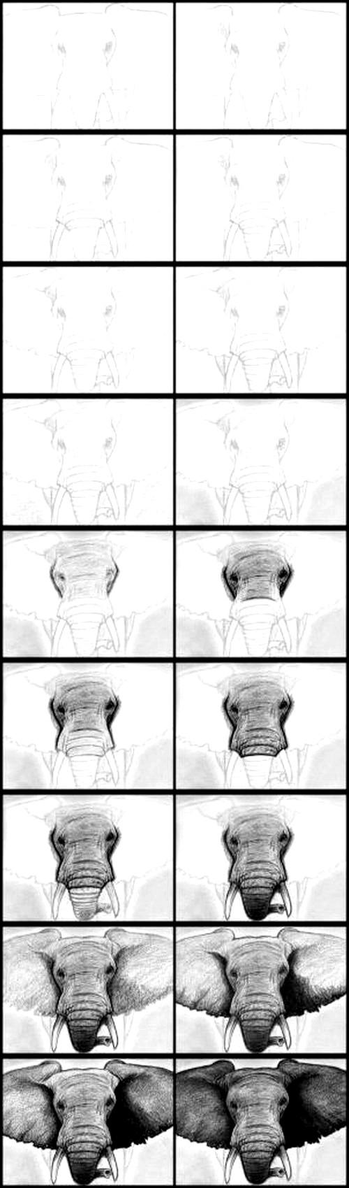 Фото - Як намалювати слона