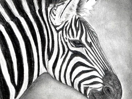 Фото - Як намалювати зебру?