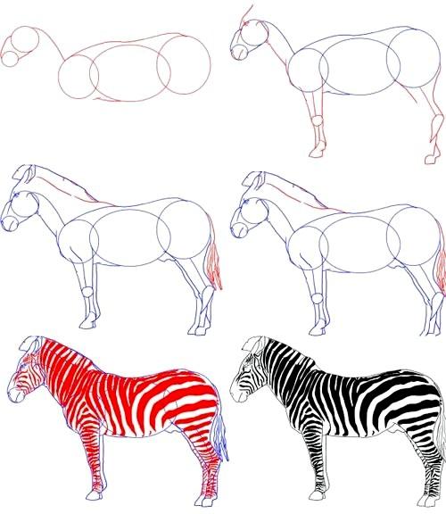 Фото - Як намалювати зебру