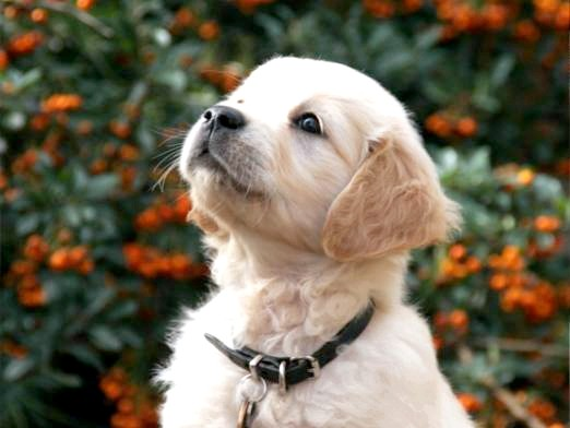 Фото - Як назвати собаку?