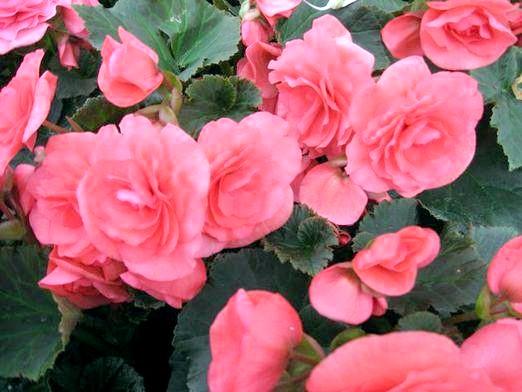 Фото - Як називається червона квітка?