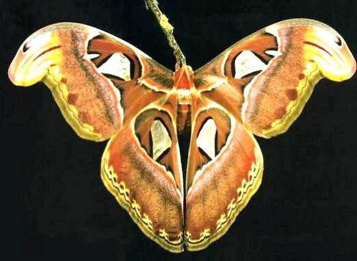 Фото - Як називаються метелики?
