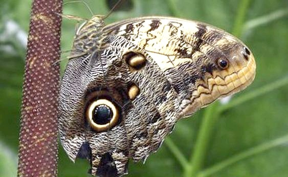 Фото - метелики