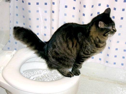 Фото - Як привчити кішку гадити?