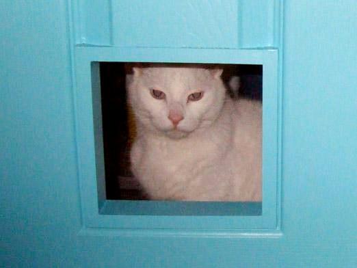 Фото - Як віднадити котів?