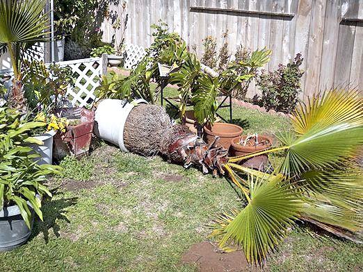 Фото - Як пересадити пальму?