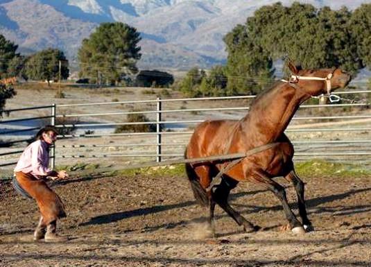 Фото - Як приручити коня?