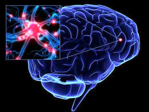 Фото - Як працює мозок?