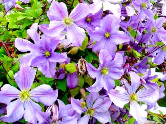 Фото - Як рослини ростуть?