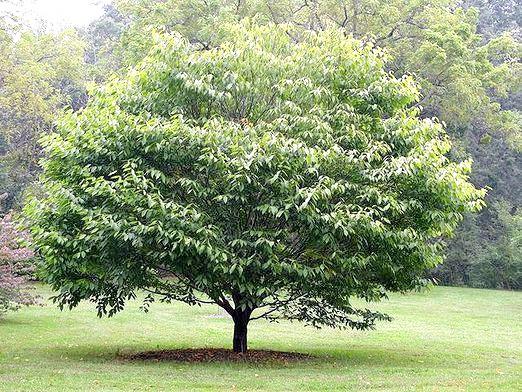 Фото - Як ростуть дерева?