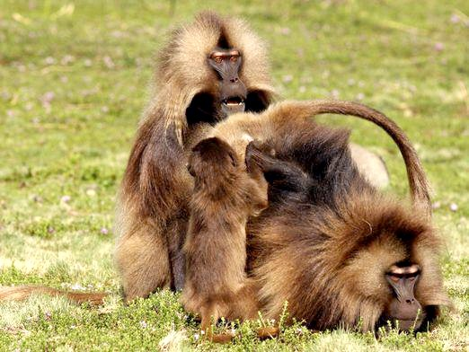 Фото - Як розмножуються тварини?