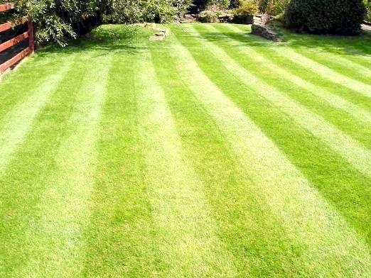 Фото - Як зробити газон?