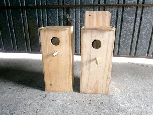 Фото - Як зробити гніздо папузі?