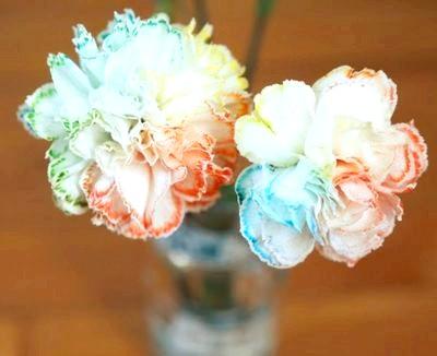 Фото - квіти