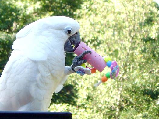 Фото - Як зробити папузі іграшку?