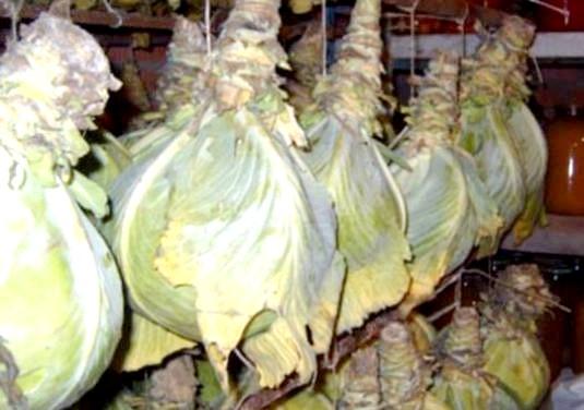 Фото - Як зберегти капусту взимку?