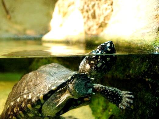 Фото - Як доглядати за черепахою?