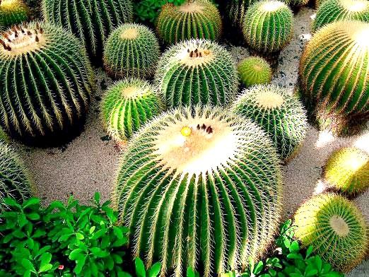 Фото - Як доглядати за кактусами?