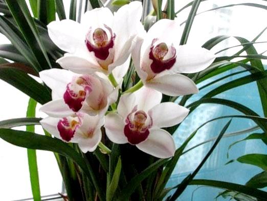 Фото - Як доглядати за орхідеями?