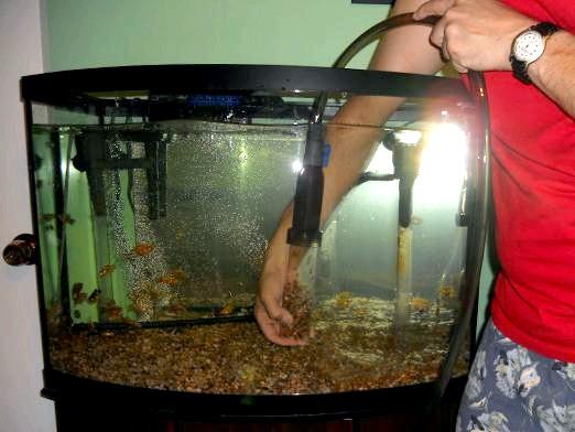 Фото - Як доглядати за рибками?