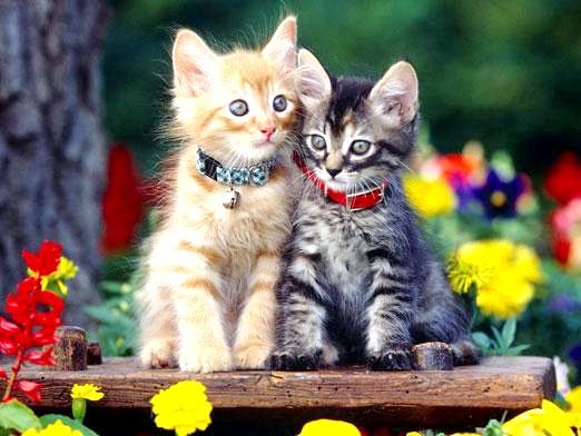 Фото - Як виховати кошеня?