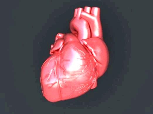 Фото - Як виглядає серце?