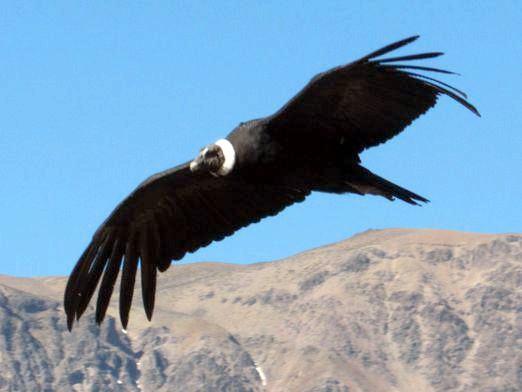 Фото - Який птах найбільший?