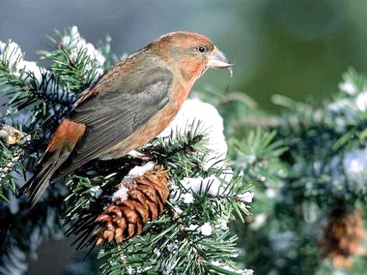 Фото - Яка птах виводить пташенят взимку?
