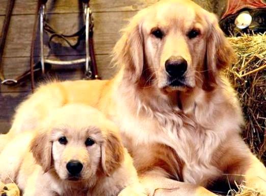 Фото - Яка собака мені підходить?