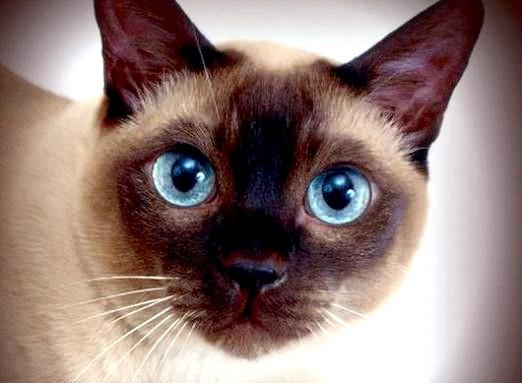 Фото - Які бувають кішки?